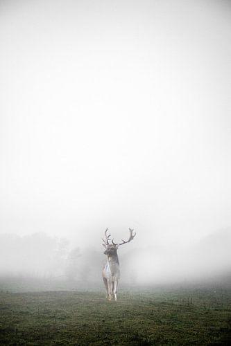 hert in de mist