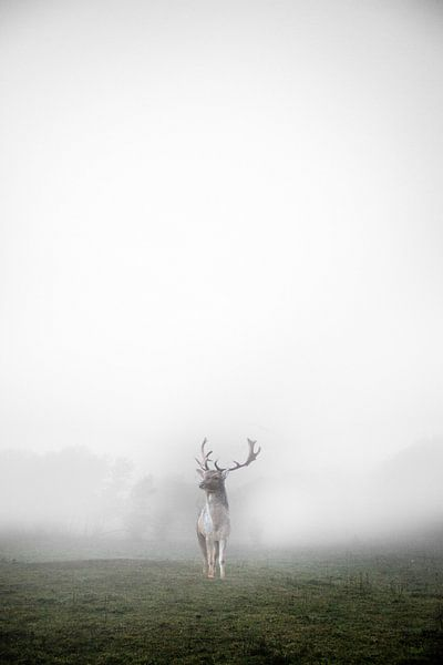 hert in de mist  van Abe Raats