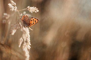 Vlinder in de ochtend van Miranda Snoeijen