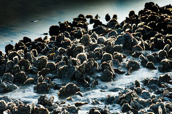 japanse oesters van Geertjan Plooijer