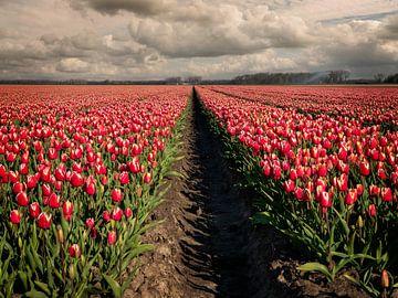 Blumenfelder in Blüte mit schönen Tulpen in Holland von Robin Jongerden
