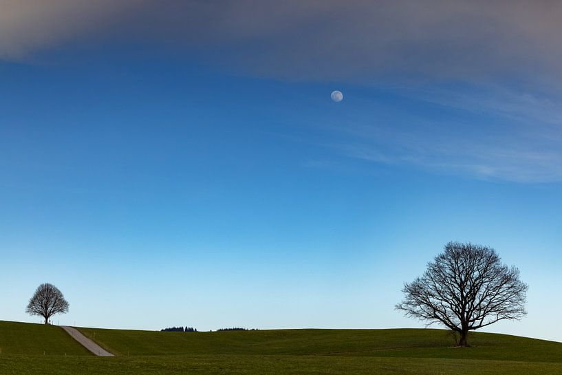 Bäume mit Mond von Andreas Müller