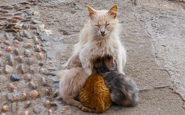 Katze mit drei Jungen von Stijn Cleynhens