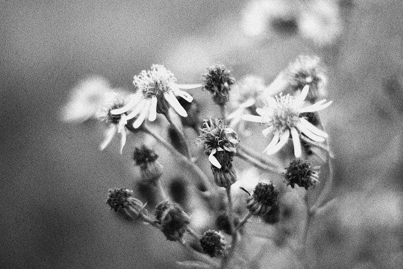 Bloemen van Geertruida van der Ploeg