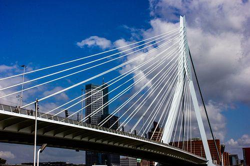 de zwaan Rotterdam van