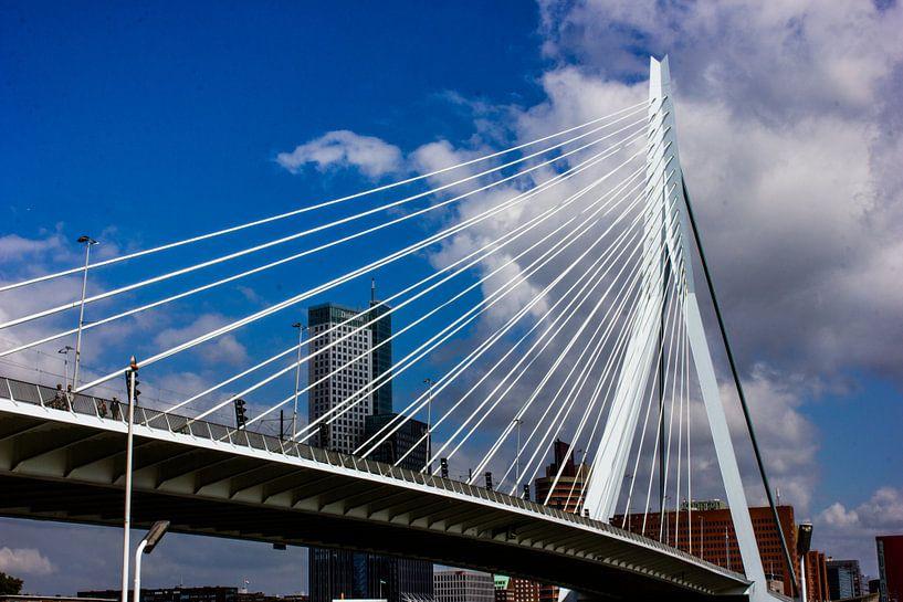 de zwaan Rotterdam van Robin Steen