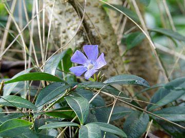 Blume von Tomas S.