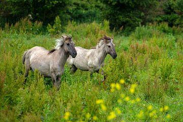 Konik paarden van Joke Beers-Blom