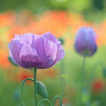 springtime von