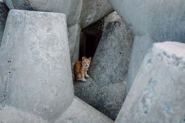 Ontmoeting met een tijger tussen de rotsen van Karlijne Geudens