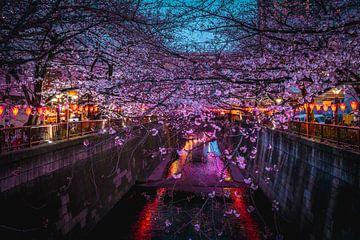 Meguro river met sakura en lichtjes van Mickéle Godderis