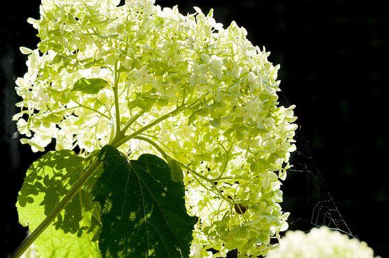 Bloem kunst, met licht, schakeringen wit en groen