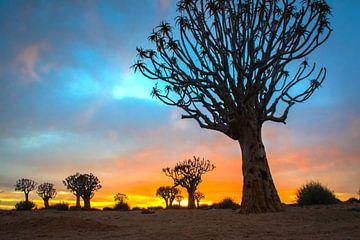 Zonsopkomst in de Kalahari woestijn met kokerbomen, Namibië van Rietje Bulthuis