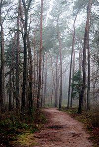 Mist in Birkhoven Amersfoort van Watze D. de Haan