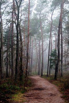 Mist in Birkhoven Amersfoort