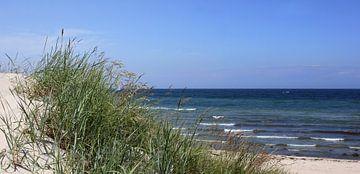 Sommerdünen van Ostsee Bilder