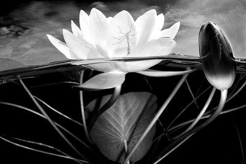 Storm boven de waterlelies van Filip Staes