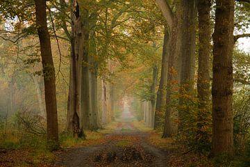 Herbst in Bergen op Zoom von Sabina Meerman