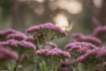 Blumen Teil 30 von Tania Perneel