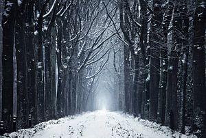 Het bevroren bospad