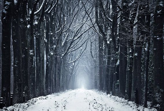 Het bevroren bospad van Rob Visser