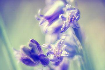 Dromerige pastel kleurige bos hyacint van Fotografiecor .nl