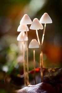 Groepje paddenstoelen van