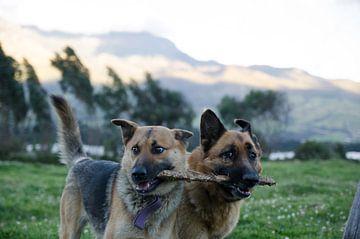 Honden van Annemarie Winkelhagen