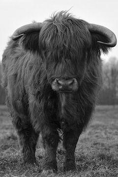 Schotse hooglander stier zwart wit von Sascha van Dam