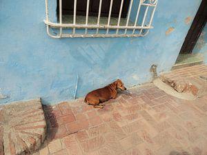 Een hondenleven op Cuba van Bianca Louwerens