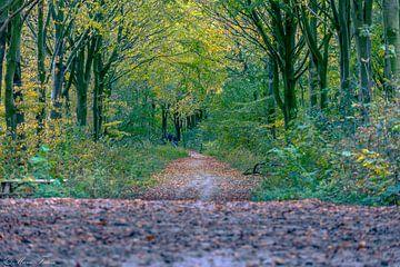 Herbst von Marco Faasse