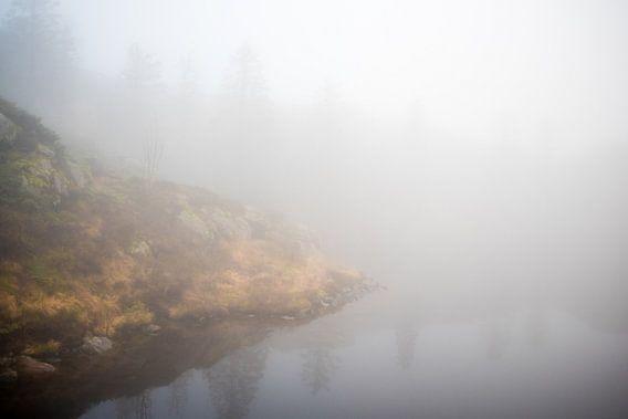Mistig meertje in Noors dennenbos, fotoprint