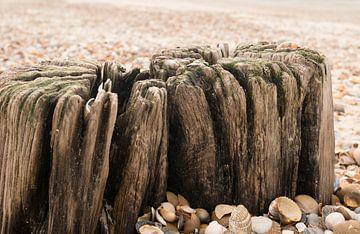 Poteaux et coquillages sur la plage sur Carola van Rooy