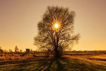 Sonnenuntergang direkt hinter einem kahlen Baum