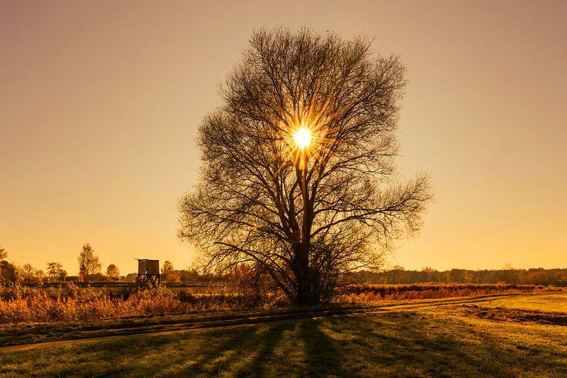 Sonnenuntergang direkt hinter einem kahlen Baum von Frank Herrmann