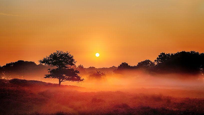 Foggy Dunes Gasteren Netherlands Zonsopkomst van R Smallenbroek