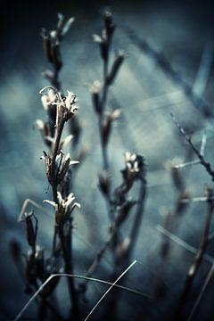 winterland van Marieke Bakker