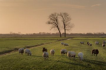 Schapen met tweelingboom van Moetwil en van Dijk - Fotografie