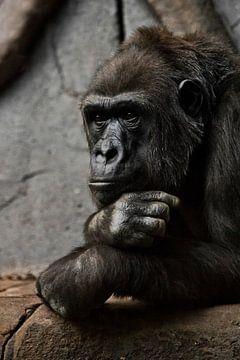 Pensieve houding, hand rekwisieten zijn hoofd. Aapje-mantropoïde gorilla vrouwtje. een symbool van b van Michael Semenov