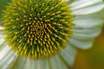 bloem macrofotografie van wil spijker