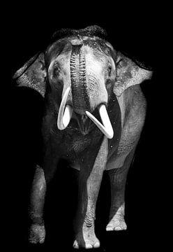 Der große wilde Elefant von Esther van Engen
