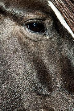 close-up paard 3 van Lina Heirwegh