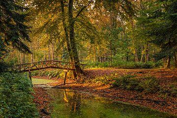 Herfst in het Slochterbos