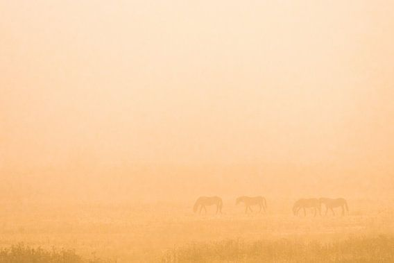 wilde paarden in de mist