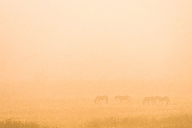 wilde paarden in de mist van jowan iven