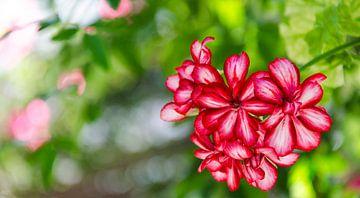 Belles fleurs sur Cynthia Hasenbos