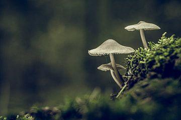 Pilze von Hans Lunenburg