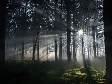 Sonnenstrahlen im Wald von Moor van Bree foto's