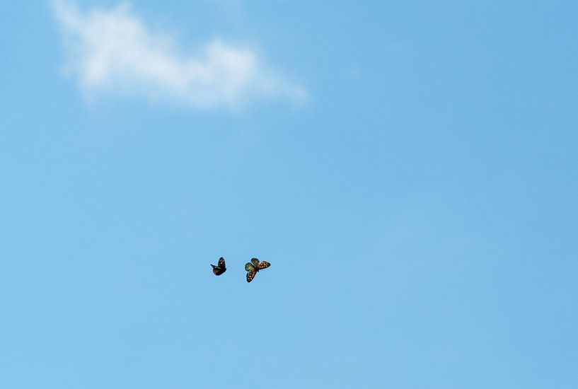 Vlinders in de blauwe lucht van Dennis Timmer