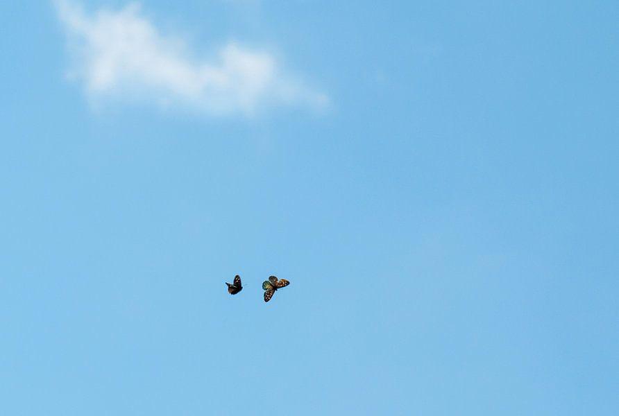 Vlinders in de blauwe lucht